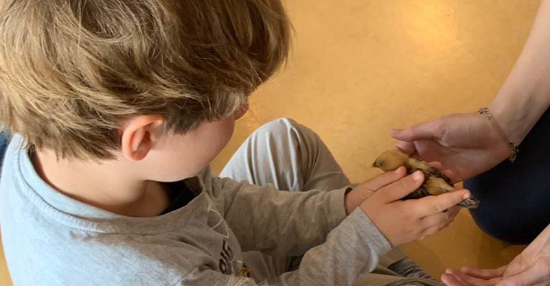 Zweisprachige Krippe und Vorschule in Uetikon am See